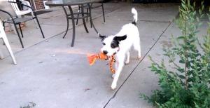 Stella play
