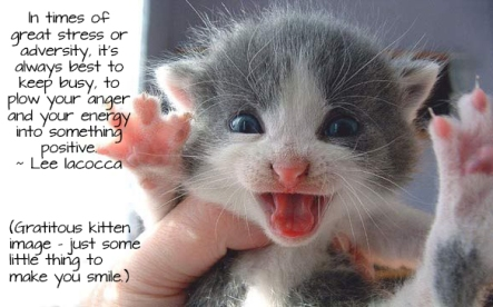kitten-stressed